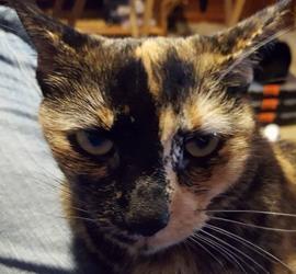 T'Challa, 4 years